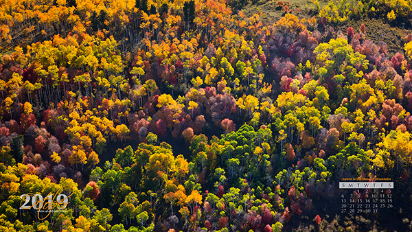 Aspens in the Wasatch Mountains